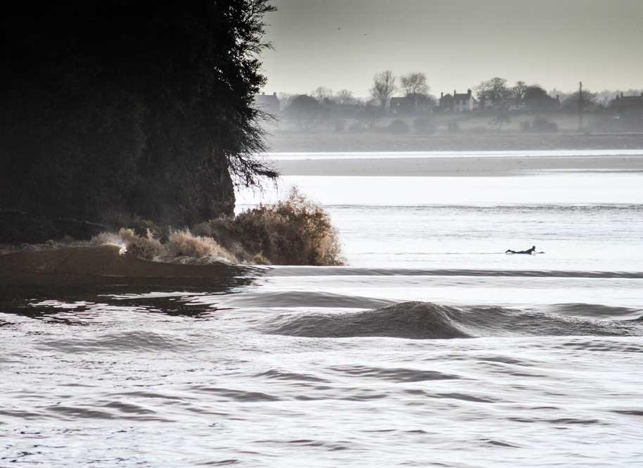 Lone Surfer On The Severn Bore